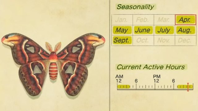 how to catch an Atlas Moth in Animal Crossing: New Horizons
